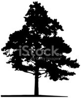 Tree,Vector,Silhouette,Coni...
