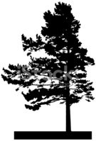 Tree,Pine Tree,Vector,Silho...