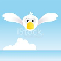 Seagull,Cloud - Sky,Flying,...