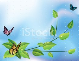 Butterfly - Insect,Vine,Cli...
