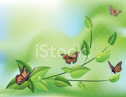 Vine,Butterfly - Insect,Lea...