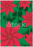 Poinsettia,Christmas,Winter...