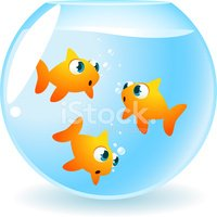 Fishbowl,Goldfish,Fish,Moti...