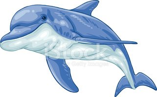 Dolphin,Clip Art,Cartoon,Ve...