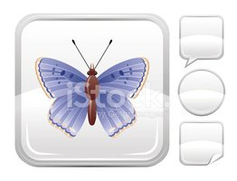 Butterfly - Insect,Cartoon,...
