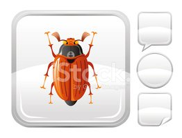 Beetle,June Beetle,Insect,V...