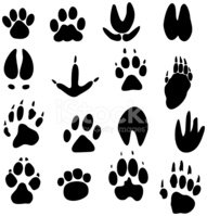 Paw,Bear,Domestic Cat,Track...