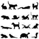 Silhouette,Dog,Domestic Cat...