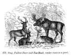Deer,Engraved Image,Stag,Fa...