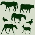 Silhouette,Cow,Moose,Wood D...