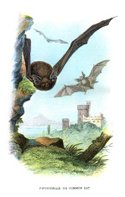 Bat - Animal,Flying,Illustr...