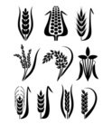Rice - Cereal Plant,Wheat,C...