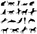 Dog,Domestic Cat,Silhouette...