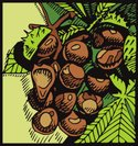 Chestnut,Chestnut Tree,Nut ...