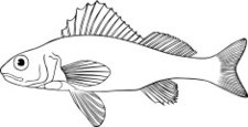 Fish,Illustrations And Vect...