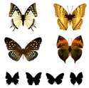 Butterfly - Insect,Black Co...