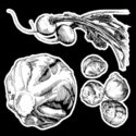 Vegetable,Food,Drawing - Ar...