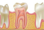 Human Teeth,Dental Health,A...