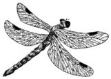 Dragonfly,Fly,Wing,Insect,B...