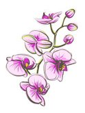 Orchid,Vector,Tropical Flow...