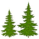 Tree,Fir Tree,Pine Tree,For...