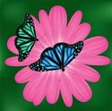 Butterfly - Insect,Nature,C...