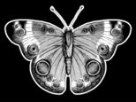 Butterfly - Insect,Engraved...