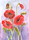 Watercolor Painting,Poppy,F...