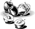 Plum,Vector,Black And White...