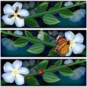 Butterfly - Insect,Bee,Flow...