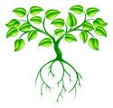 Root,Leaf,Tree,Computer Icon,…
