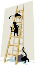 Ladder,Domestic Cat,Water F...