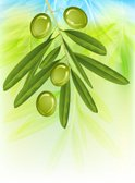 Green Olive,Olive Tree,Leaf...