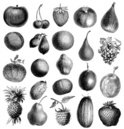 Fruit,Engraving,Old-fashion...