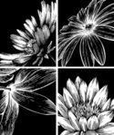Water Lily,Lily,Vector,Summ...
