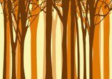 Forest,Silhouette,Back Lit,...