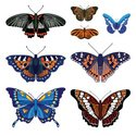 Butterfly - Insect,Collecti...