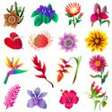 Passion Flower,Heliconia,An...