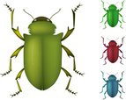 Beetle,Insect,Nature,Pest,V...