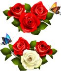 Butterfly - Insect,Rose - F...