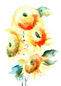 Watercolor Painting,Sunflow...