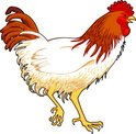 Rooster,Domestic Animals,Fe...