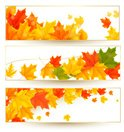 Autumn,Clip Art,Leaf,Color ...