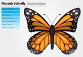 Butterfly - Insect,Change,A...