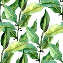 Watercolor Painting,Pattern...
