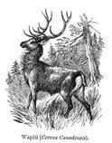 Elk,Moose,Engraved Image,A...