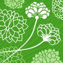 Chrysanthemum,Leaf,Herb,Flo...