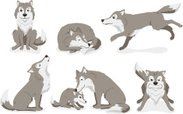 Wolf,Coyote,Howling,Gray Wo...