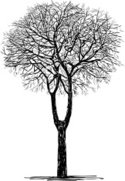 Tree,Winter,Season,Symbol,I...