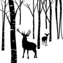 Forest,Birch Tree,Deer,Silh...